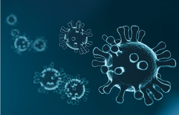 Coronavirus cells